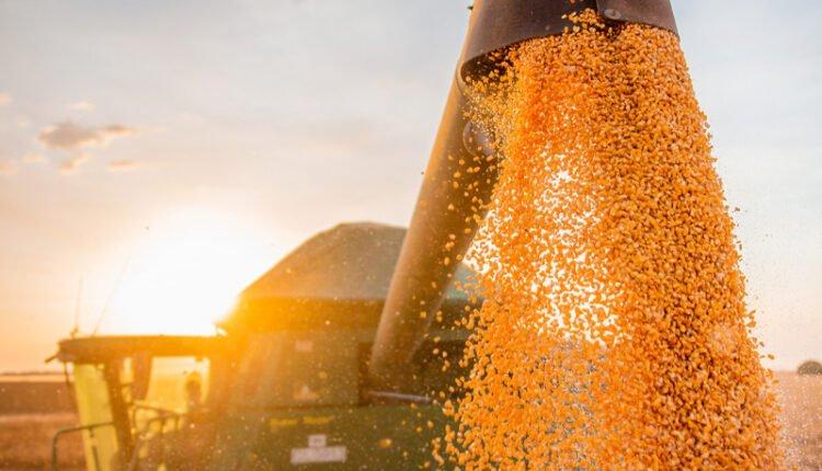 Bahia tem safra histórica estimada de 9,9 milhões de grãos em 2020. Foto: Aiba/Divulgação