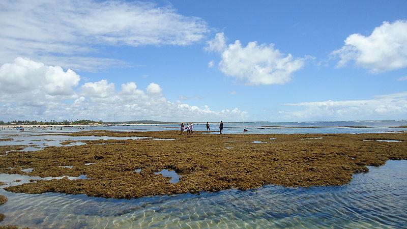 Praia de Itacimirim 20 praias na Bahia que você precisa visitar. Confira!