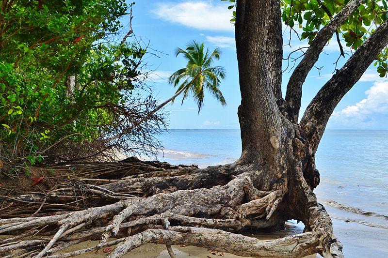 Praia de Moreré